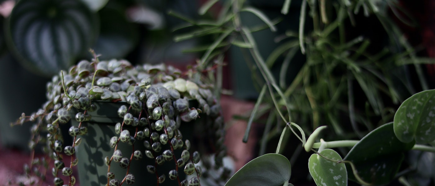 Nick Alexander's 10 Plants Everyone Should Have in Their Home
