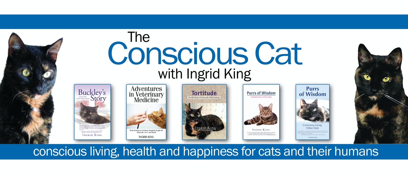 Ingrid King's Top 10 Picks for Cat Care