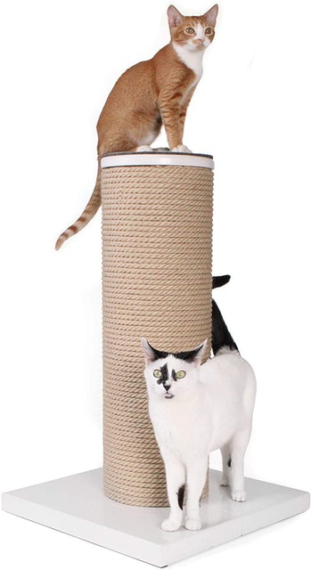 Primetime Petz Hauspanther MaxScratch 1