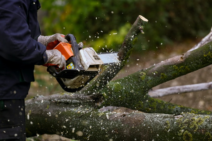 Ensure the Chainsaw is Comfortable to Work With