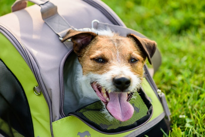 Want to Make Traveling With Your Dog Easier?