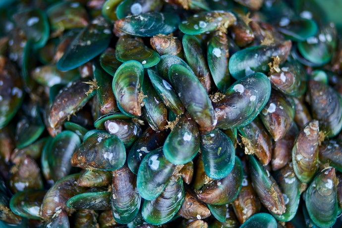 Green-Lipped Mussel Oil: Contains Rare Omega-3s