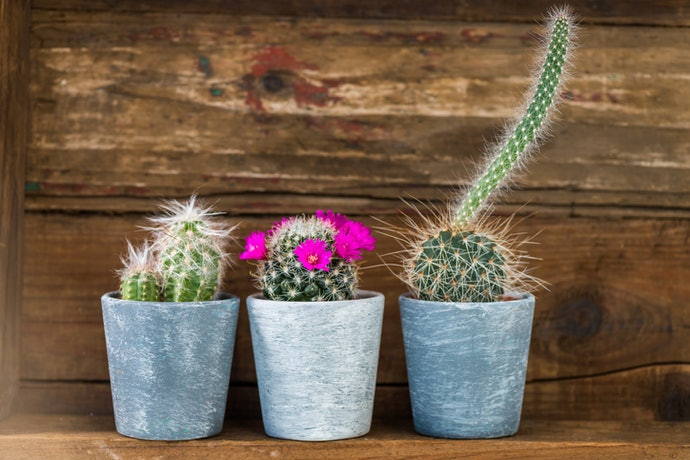 Pick a Plant Based On When You Want it to Bloom