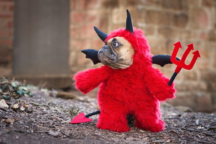 Smaller Dogs Can Handle More Complex Costumes