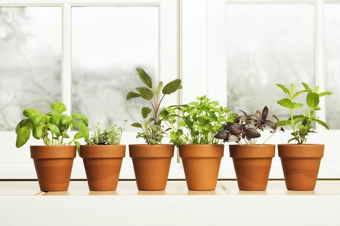 Decide Where Your Indoor Garden Will Live