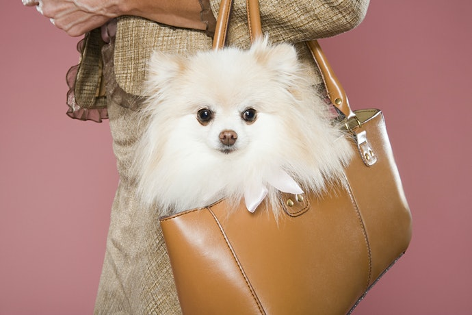 Choose a Bag or a Car Leash so the Dog Can Safely Go Anywhere