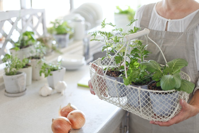 Find an Indoor Garden Design You Like