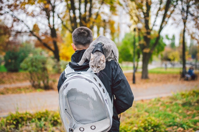 Clear Backpacks for Safety