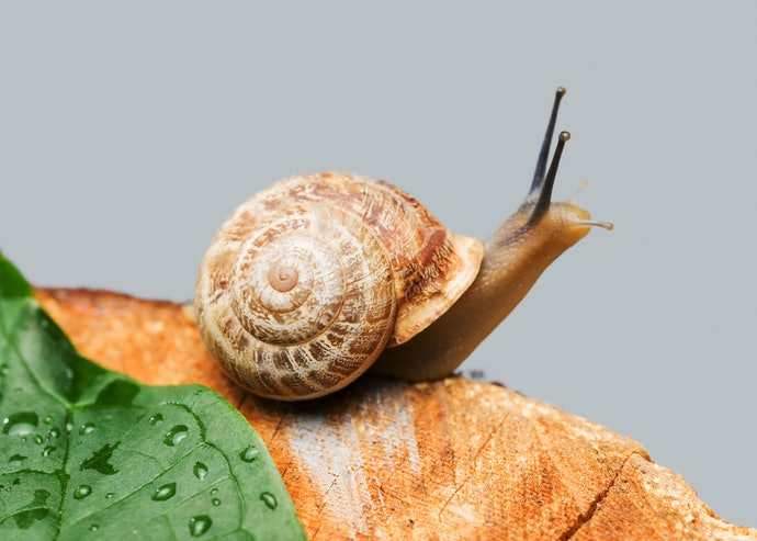 Snail Mucin Extract Can Deeply Moisturize and Rejuvenate