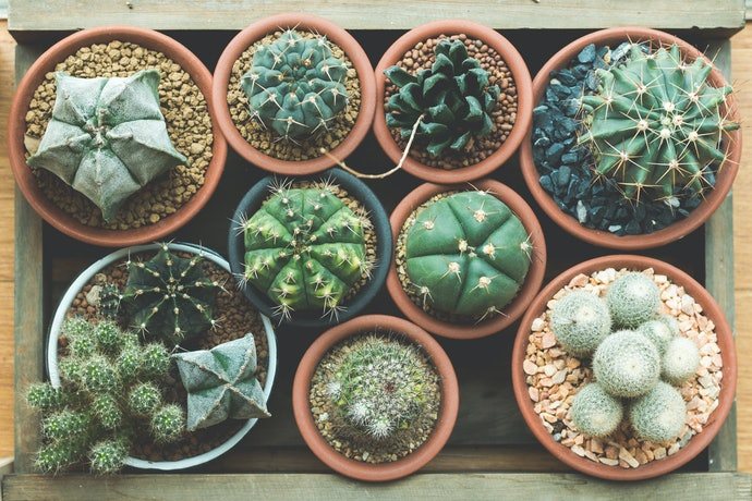 Decide What Kind of Plant Vibe You're Going For