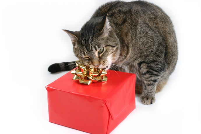 Gifts for Cat Owners Can be for Their Cat!