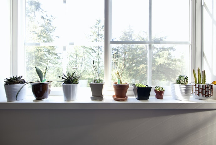 Figure Out Where to Put Your Succulents