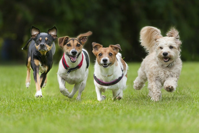 Research Your Dog's Breed or Breed Mix