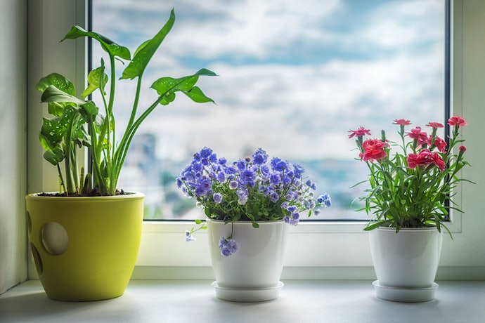 When Looking at Light Requirements, Check the Direction of Your Windows