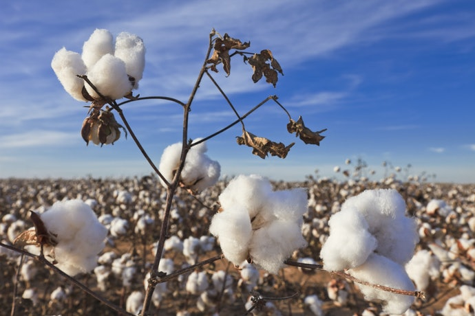 Cotton is Biodegradable but Prone to Moisture Damage