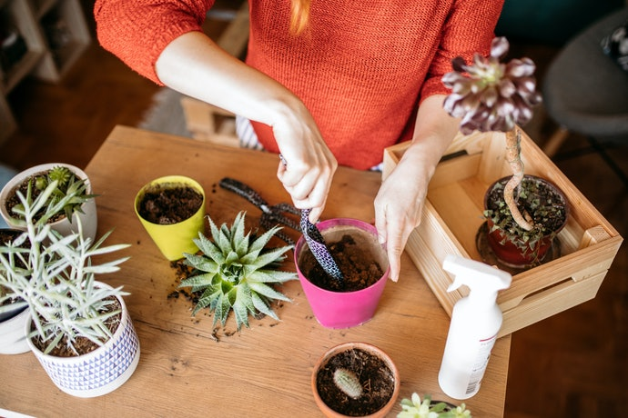 Consider Your Plant Care Approach