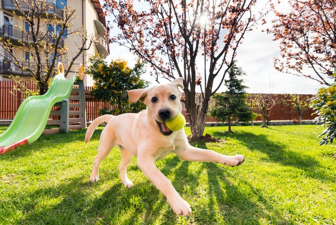 Think About Issues Regarding Dogs and Sloped Lawns