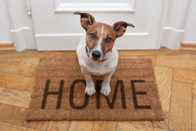 Select Dog-Themed Household Goods for Proud Dog Parents