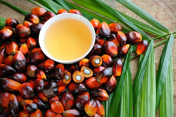 Palm Oil is Essential but Can Be Controversial