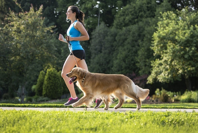 Keep Your Furry Friend Active and Healthy