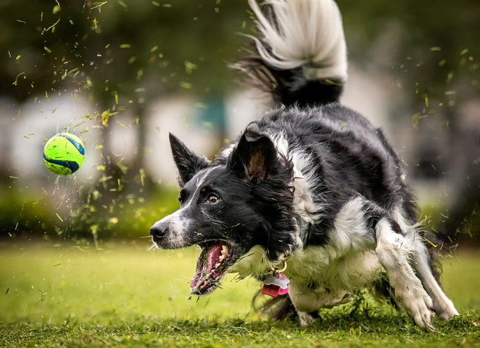 Automatic Ball Launchers Keep Active Dogs Busy