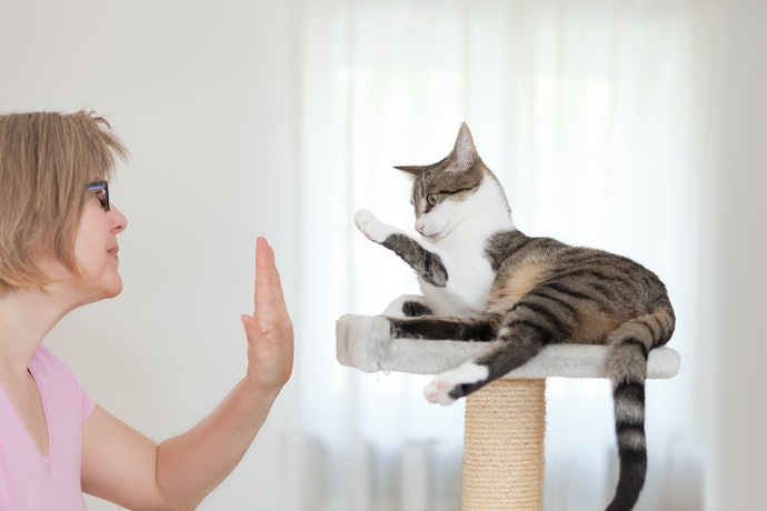 How to Get Your Cat to Use a Scratching Post
