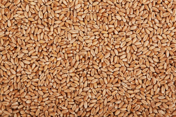 Choose Alternatives to Processed White Wheat