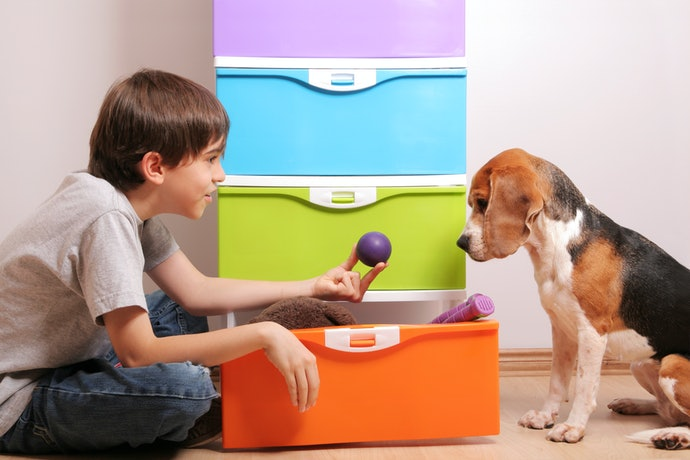 Select Storage With or Without a Lid Based on Your Dog's Habits
