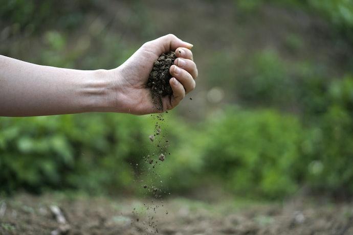 Obtain a Soil Test Kit
