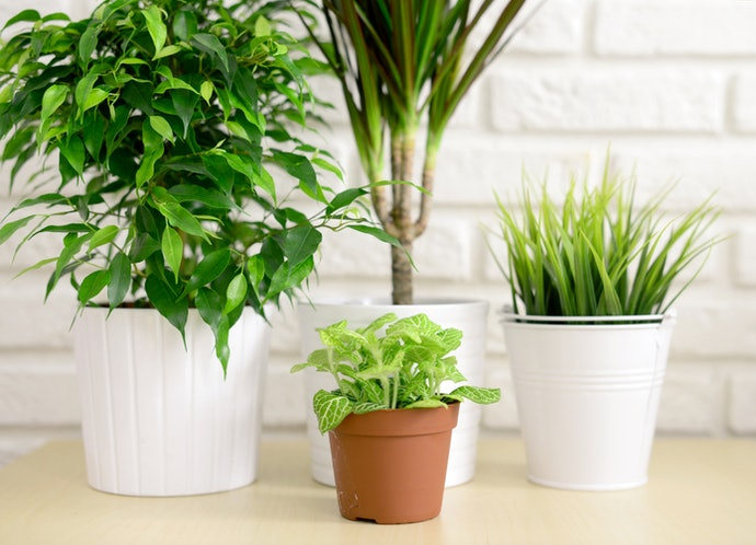 Pick a Size Suitable for Your Plant