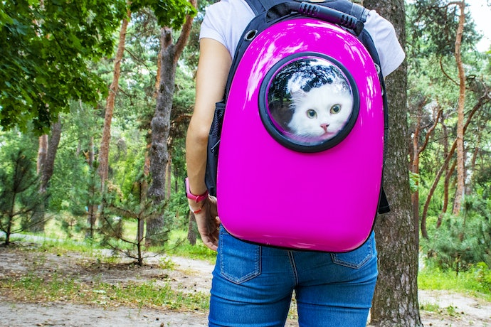 How to Help Your Cat Get Used to a Cat Backpack