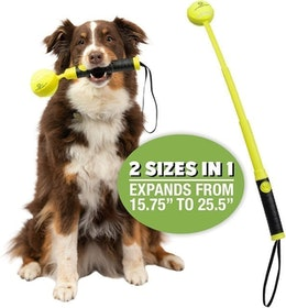 Top 9 Best Ball Launchers for Dogs in 2020 (Nerf Dog, Chuckit!, and More) 1