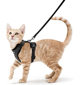 Top 10 Best Cat Harnesses in 2020 (Kitty Holster, rabbitgoo, and More) 4