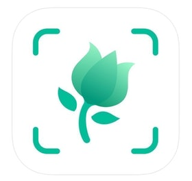 Top 10 Best Apps to Identify Plants in 2020 (iNaturalist, PlantSnap, and More) 1