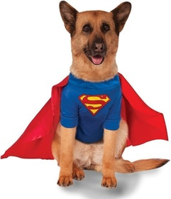 Top 10 Best Dog Halloween Costumes in 2020 (Rubie's, Animal Planet, and More) 4