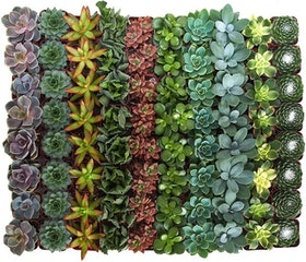 Top 10 Best Succulents in 2021 (Costa Farms, Plants for Pets, and More) 2