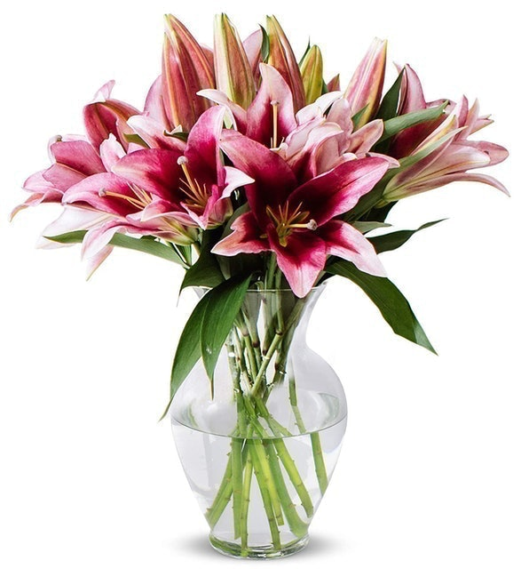 Benchmark Bouquets Stargazer Lily Bunch 1