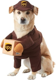 Top 10 Best Dog Halloween Costumes in 2020 (Rubie's, Animal Planet, and More) 2