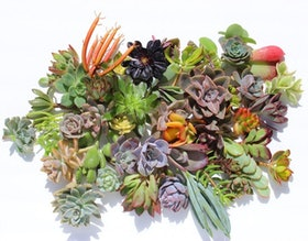 Top 10 Best Succulents in 2021 (Costa Farms, Plants for Pets, and More) 5