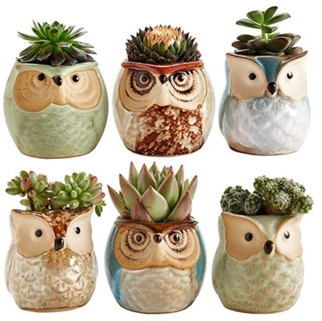 Sun-E Owl Succulent Ceramic Pot Set 1