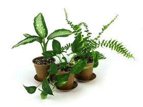 Top 10 Best Indoor Plants for Air Quality in 2021 (Hirt's Gardens, JM Bamboo, and More) 2