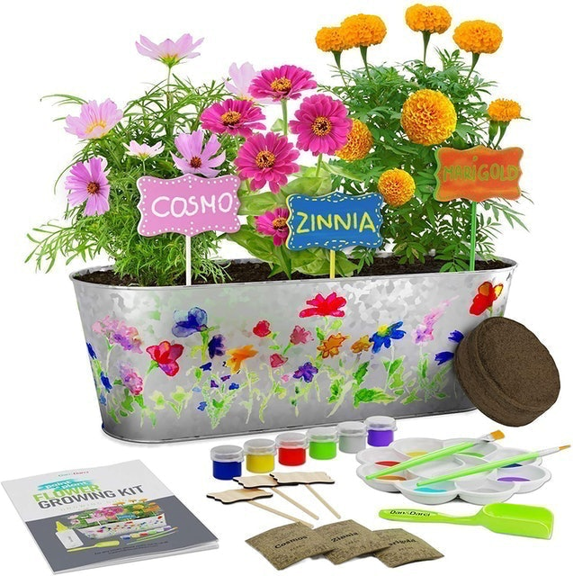 Dan&Darci Paint & Plant Flower Growing Kit 1