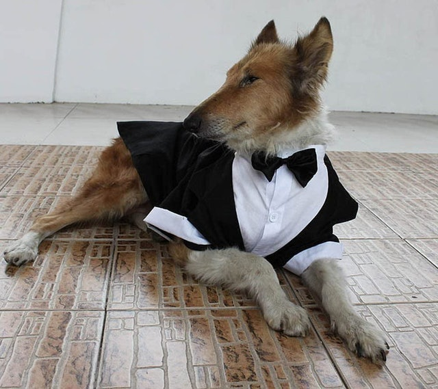 Evursua Dug Tuxedo Wedding Party Suit 1