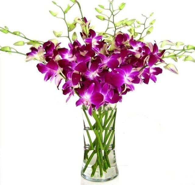 eFlowerWholesale Dendrobium Purple Orchids 1