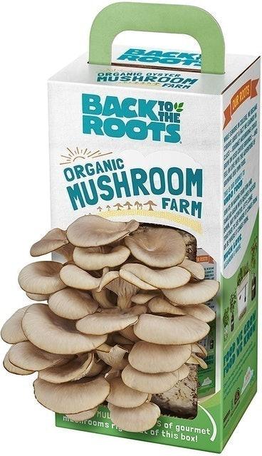 Back to the Roots Organic Mushroom Farm 1