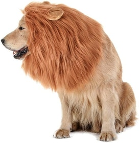 Top 10 Best Dog Halloween Costumes in 2020 (Rubie's, Animal Planet, and More) 5