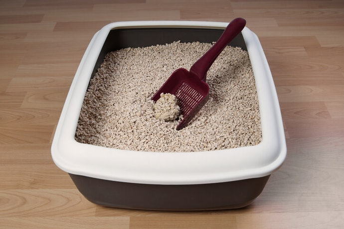 Get Clumping Litter so You Can Clean Easily and Frequently