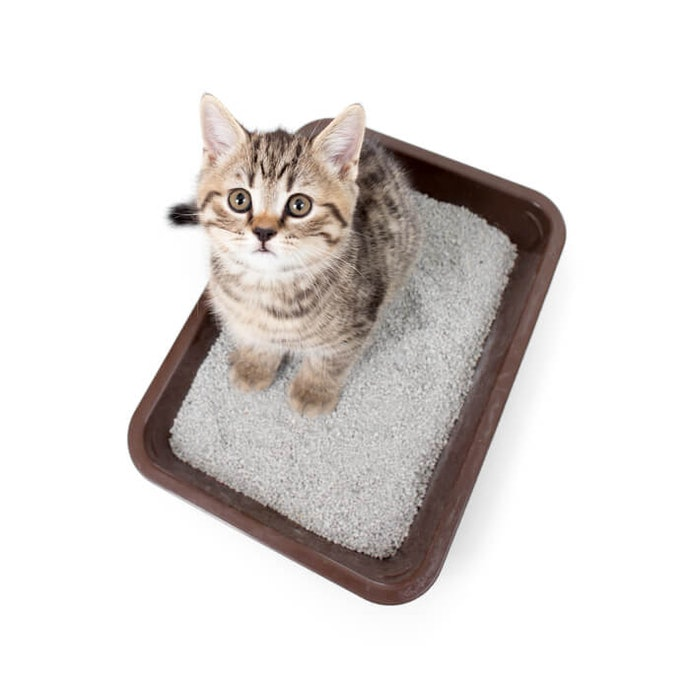 Cats Have Sensitive Noses: Get Odor-Absorbing, Unscented Litter