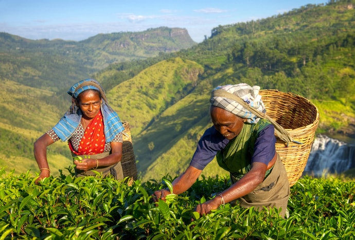 Tea-Drinking Initiates and the Eco-Conscious May Benefit from a Robust Informational Section