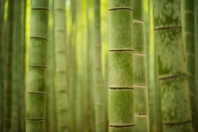 Bamboo is Sustainable and Comfortable